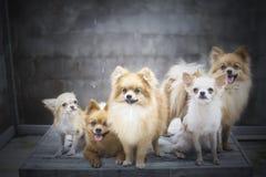семья собаки Стоковые Изображения