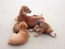 семья собаки Стоковые Изображения RF