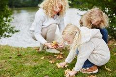 Семья собирая листья Стоковое Изображение