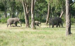 Семья слона в Кении стоковое фото
