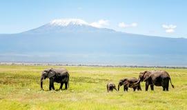 Семья слонов в Кении с держателем Килиманджаро в backg Стоковое фото RF