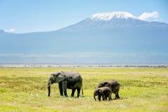 Семья слонов в Кении с держателем Килиманджаро в backg Стоковая Фотография