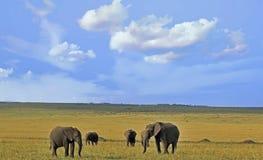 Семья слонов на обширных открытых равнинах Masai Mara, Кения, Стоковое фото RF