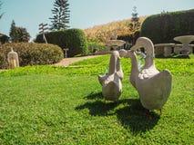 Семья утки на зеленой траве Стоковые Изображения