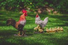Семья цыпленка модельная, украшенная в саде Стоковое Изображение RF