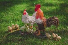 Семья цыпленка модельная, украшенная в саде Стоковая Фотография