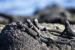 Семья ящериц Стоковое Изображение