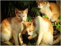 Семья Catonine Стоковое фото RF