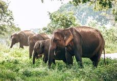 Семья Elefants около пруда в национальном природном парке Udawalawe, Стоковое Изображение