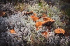 Семья toadstools прятала в мхе в древесине Стоковое Изображение RF
