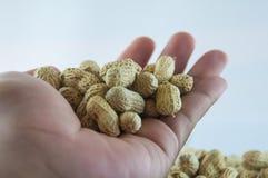 Семя арахисов Много арахисов в раковинах поднимающее вверх арахисов mkii eos dof конца предпосылки 1ds отмелое Стоковое Фото
