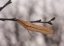 семя ветви Стоковые Фото