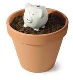 Семя денег Стоковые Изображения