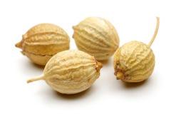 семя кориандра Стоковое фото RF