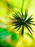 Семя макроса стоковые фото