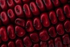 семя мозоли Стоковое фото RF