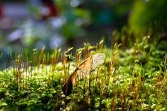 Семя на мхе Стоковое Фото