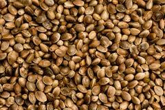 семя пеньки Стоковые Фотографии RF