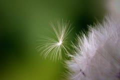 семя пролома свободное маленькое к пробовать Стоковые Изображения RF