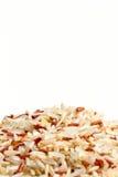 семя риса Стоковая Фотография RF