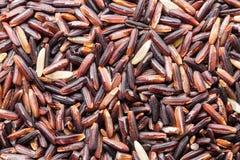 семя Рис-ягоды Стоковое Изображение RF