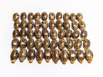 Семя рицинуса Стоковое фото RF