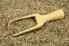 Семя тимона разбросанное с деревянным ветроуловителем стоковое фото