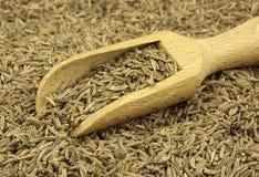 Семя тимона разбросанное с деревянным ветроуловителем стоковые изображения rf