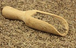 Семя тимона разбросанное с деревянным ветроуловителем стоковая фотография rf