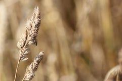 Семя травы и муха Стоковые Изображения RF