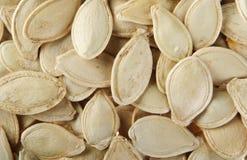 семя тыквы детали Стоковое Изображение