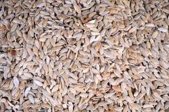семя тыквы Стоковое Фото
