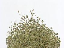 семя фенхеля 2 Стоковое Изображение RF