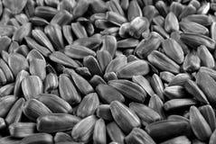 семя стоковое фото