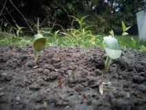 семя стоковое изображение
