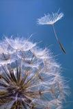 семя Стоковые Фотографии RF