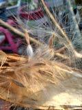 семя Стоковые Фото