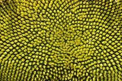 семя Стоковые Изображения RF