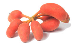 Семя fruit& x28 Blume rufa Uvaria; Центрики азиатского буйвола Стоковые Фото