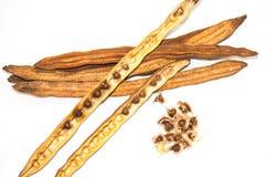 Семя Moringa Стоковые Фото