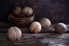 Семя ` s oddloam Cerbera, семя pong Pong Стоковые Изображения