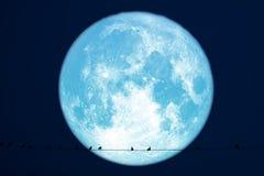 Сена луны планеты птицы силуэта назад на линии силы электрической стоковое изображение