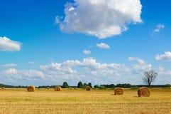 сена поля bales вал мертвого золотистого круглый Стоковое Изображение