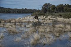 Сено болота Стоковое Фото