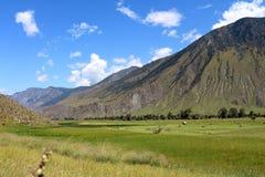 Сено в горах Altai Стоковая Фотография RF