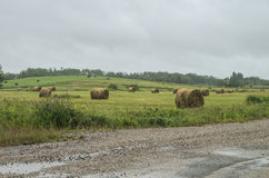 Сено в дожде Стоковая Фотография