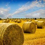 сено изумительных bales золотистое Стоковые Изображения