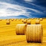 сено изумительных bales золотистое Стоковое Изображение
