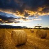 сено изумительных bales золотистое Стоковая Фотография RF