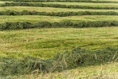 сено лета делая ландшафт поля в сельской сельской местности Стоковая Фотография RF
